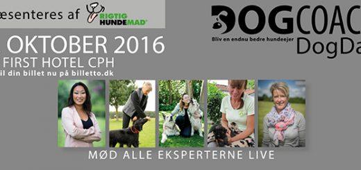 DogDay workshop for hundeejere